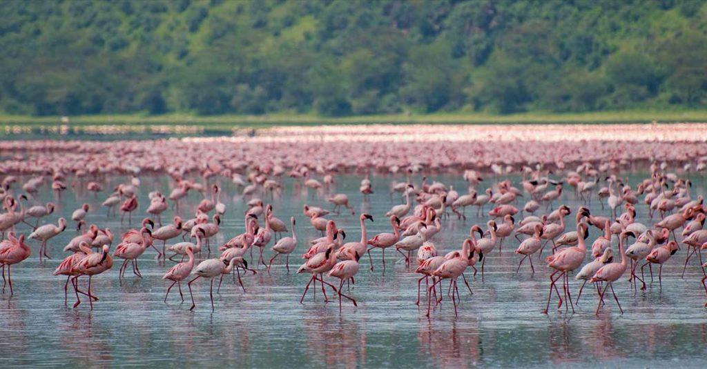 Viajar a Kenia - Africa: flamingos lago nakuru