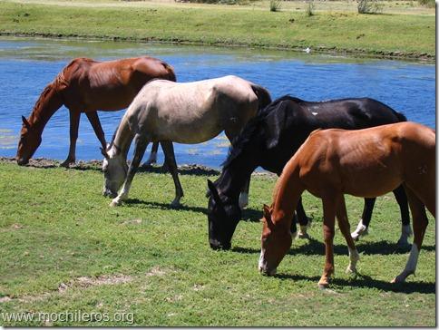 caballos colores