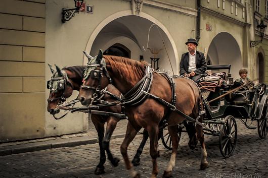 caballos en praga