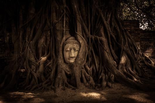 Cabeza del gran Buda en las raíces del árbol