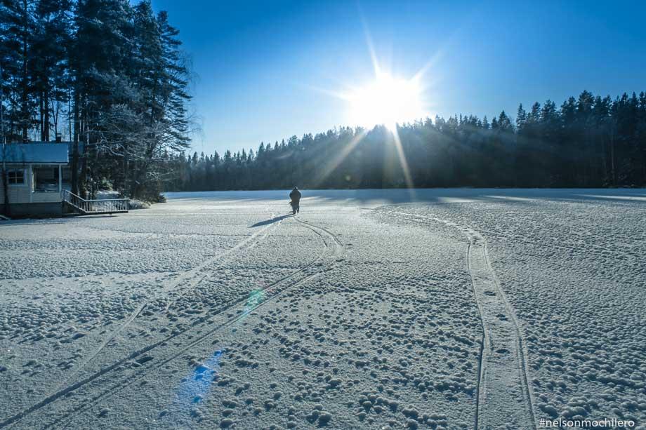 Photo of La maravilla de los frios bosques nórdicos