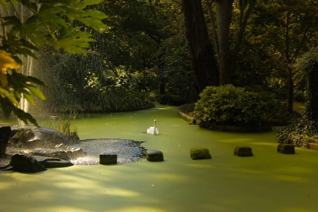 Cisne en los jardines de Quinta da Aveleda Portugal