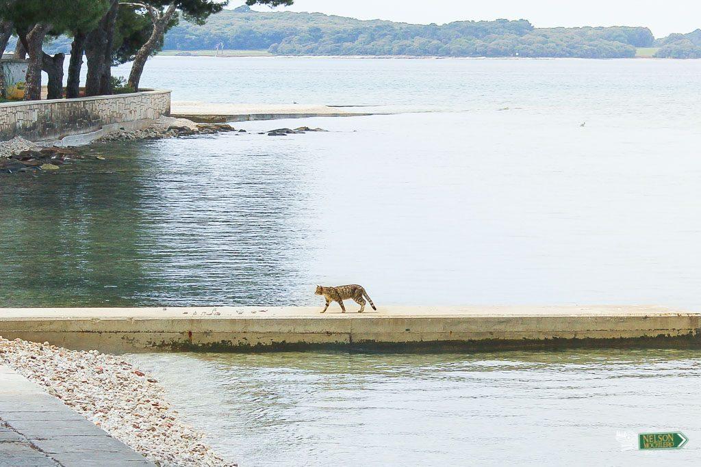 gato en Croacia - Fazana