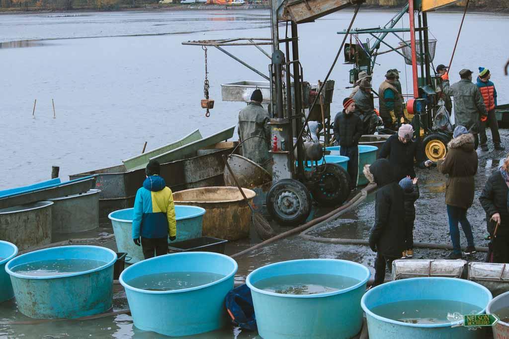 Cómo cocinar un pescado: selección de peces al aire libre